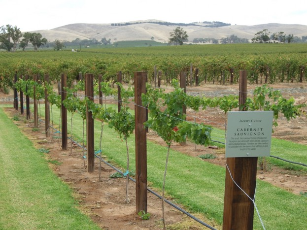 Jacobs Creek vines